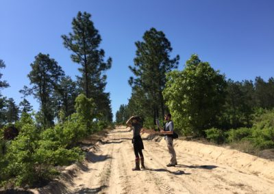 creating habitat for rare red-cockadedwoodpeckers in the sandhills