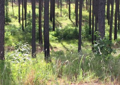 ecological management with fire in GA