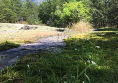 Rare granite flatrock communities in GA