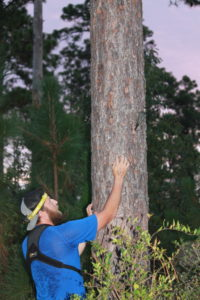 photo of man in tree with woodpecker
