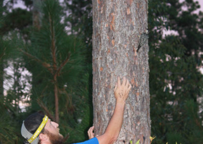 Photo of man climbing tree