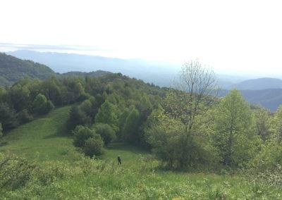 photo of green mountain views